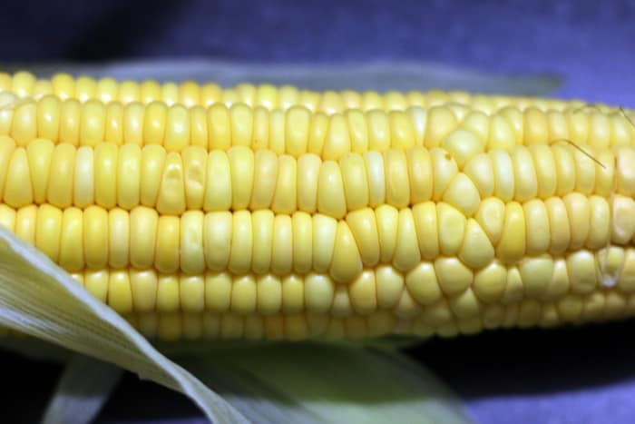 fresh corn for making grilled corn